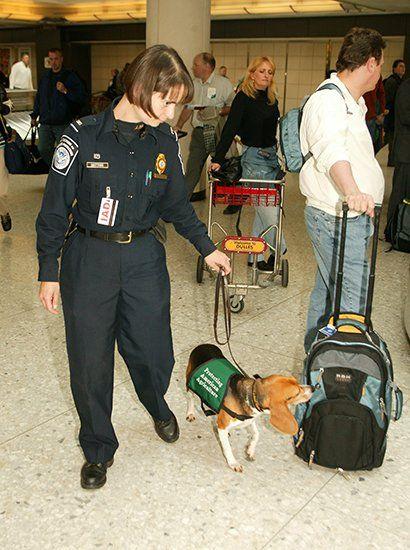 Собака учуяла контрабанду
