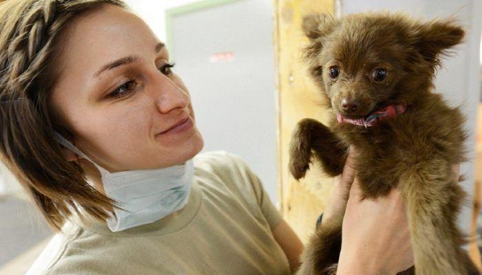Ветеринар с щенком